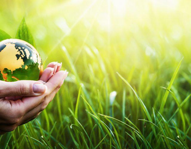 MVO, Milieu en meer